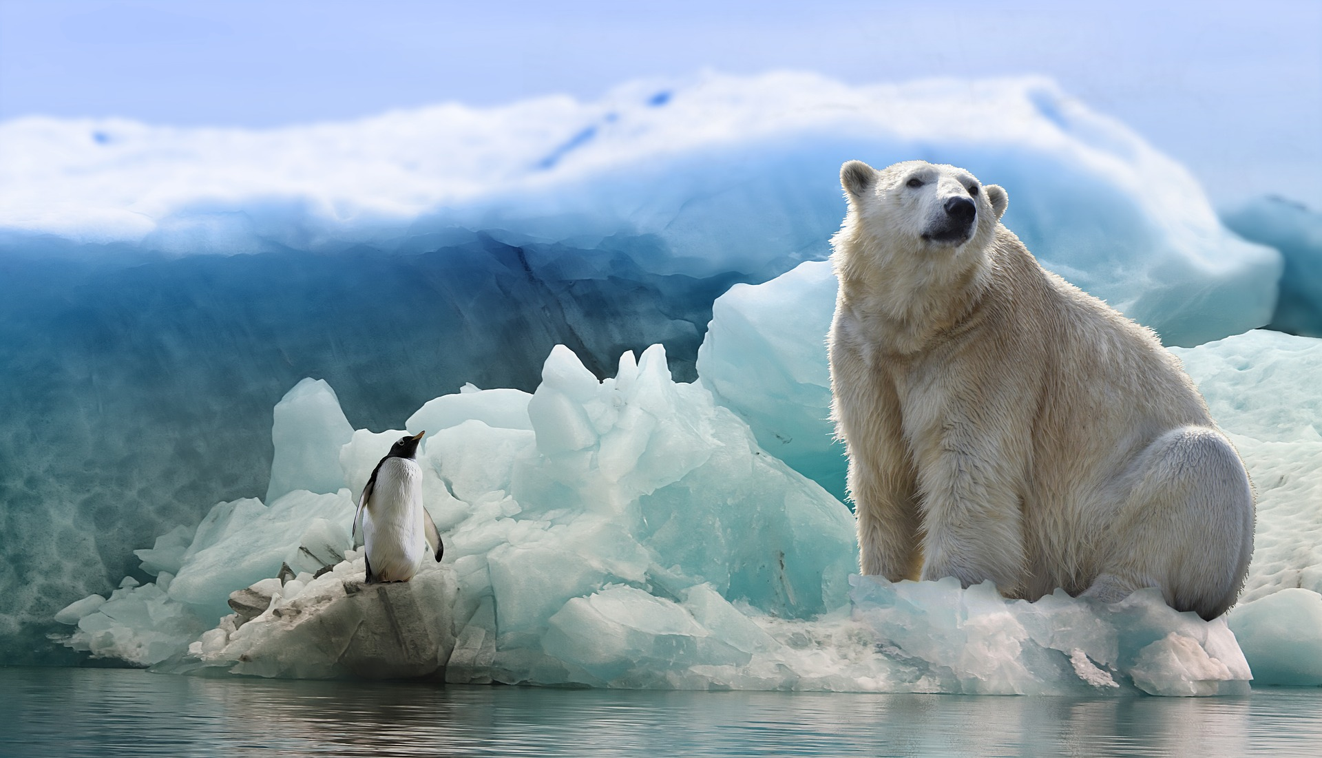 Albino Polar Bear