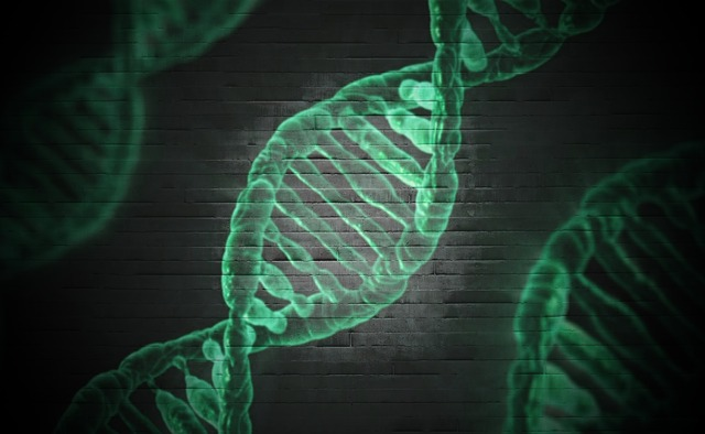 What are the sides of the DNA ladder made of
